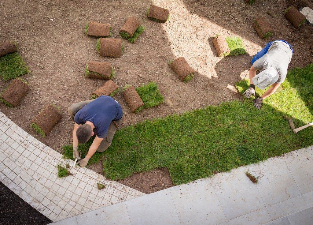 gardeners placing turf